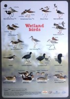 Birds of St Maarten Identification Card
