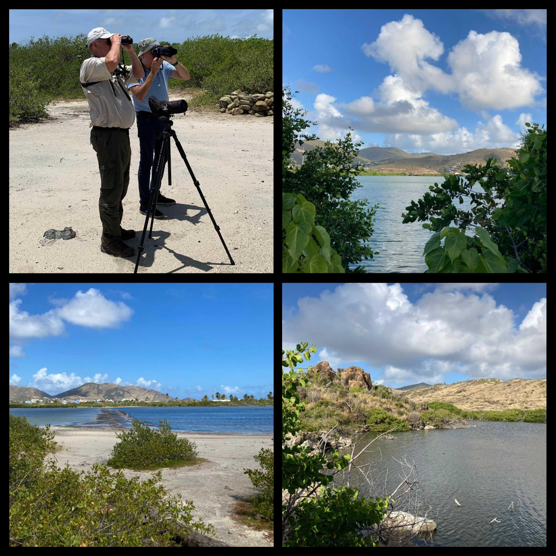 Birdwatching at Salines d'Orient